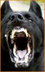 dog_attack3 (1)