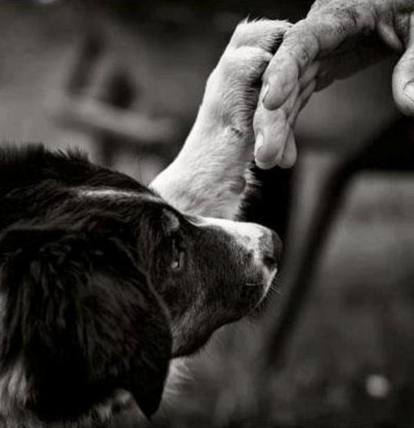 paws_foto_2