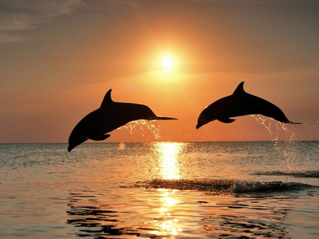 delfinia_ilobasilema